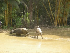 Indien Monsun (Foto: Goldreporter)