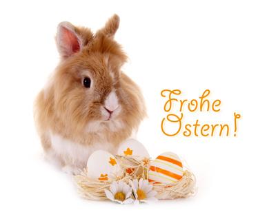 Osterhase – Frohe Ostern (Foto: grafikplusfoto - fotolia.com)