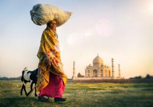 Indian Woman Carrying on Head Goat Taj Mahal Concept